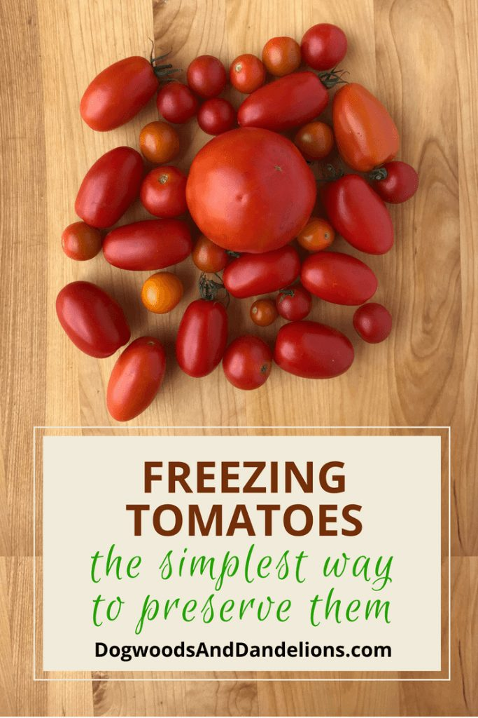 The easiest way to preserve tomatoes is to freeze them. Freezing tomatoes is so simple, you'll never let another tomato rot on the counter again. how to freeze tomatoes | preserving tomatoes | Freezing tomatoes | freezing whole tomatoes