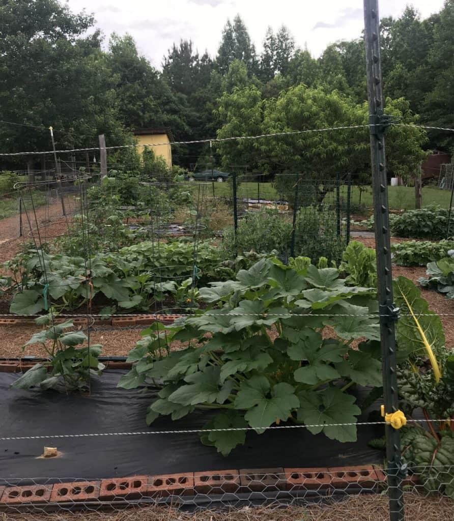 garden using black plastic