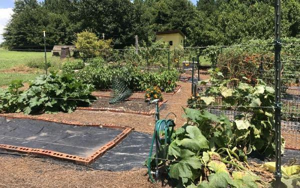 Late summer garden