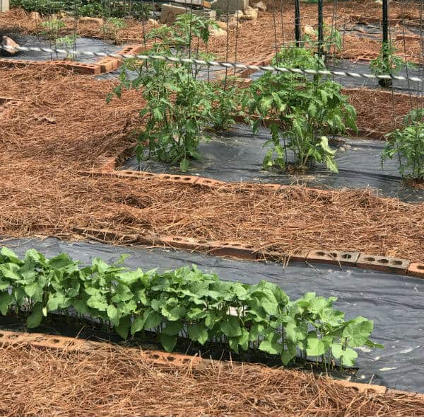Mid summer garden | how to start a garden