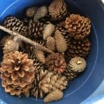 Pinecones collected on our nature walk | cheap Christmas decor