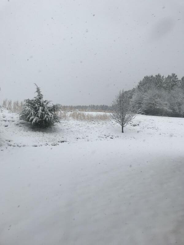 Snow day on the farm