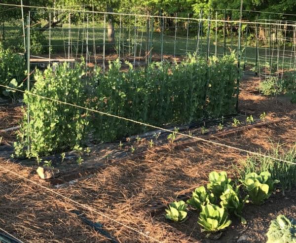 Early spring garden | how to start a garden