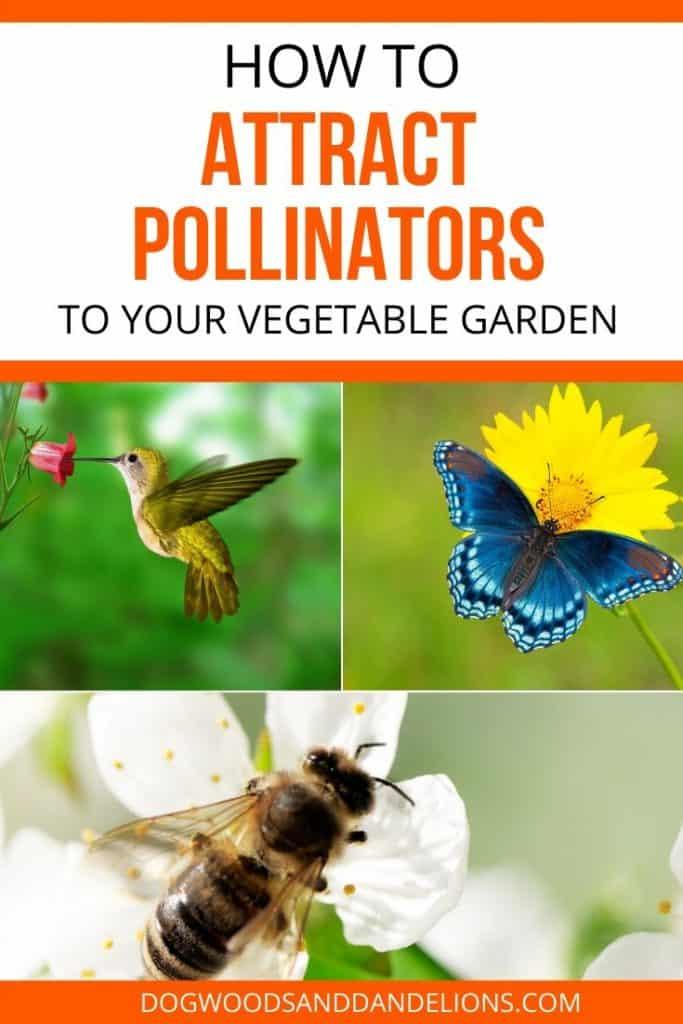 attracting bees, birds, and butterflies will help your garden