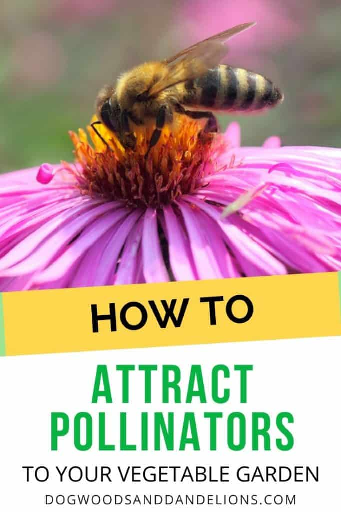 attracting bees is helpful to pollination