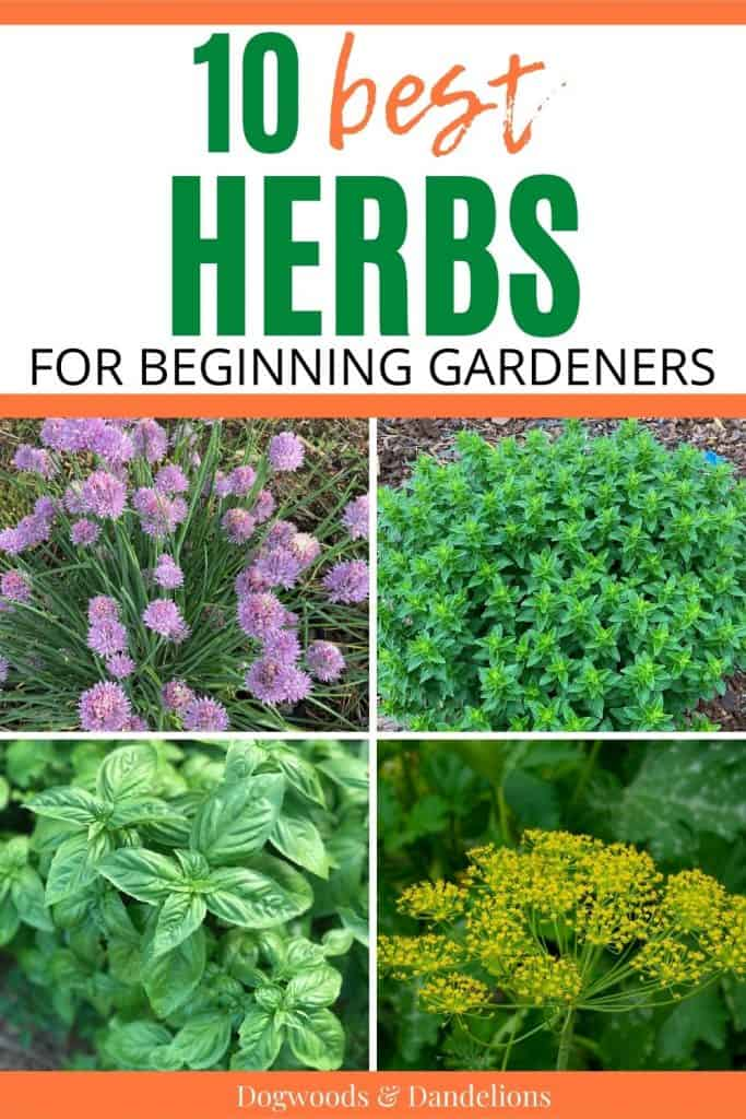 chives, oregano, basil, and dill are some of the best herbs for beginners to grow