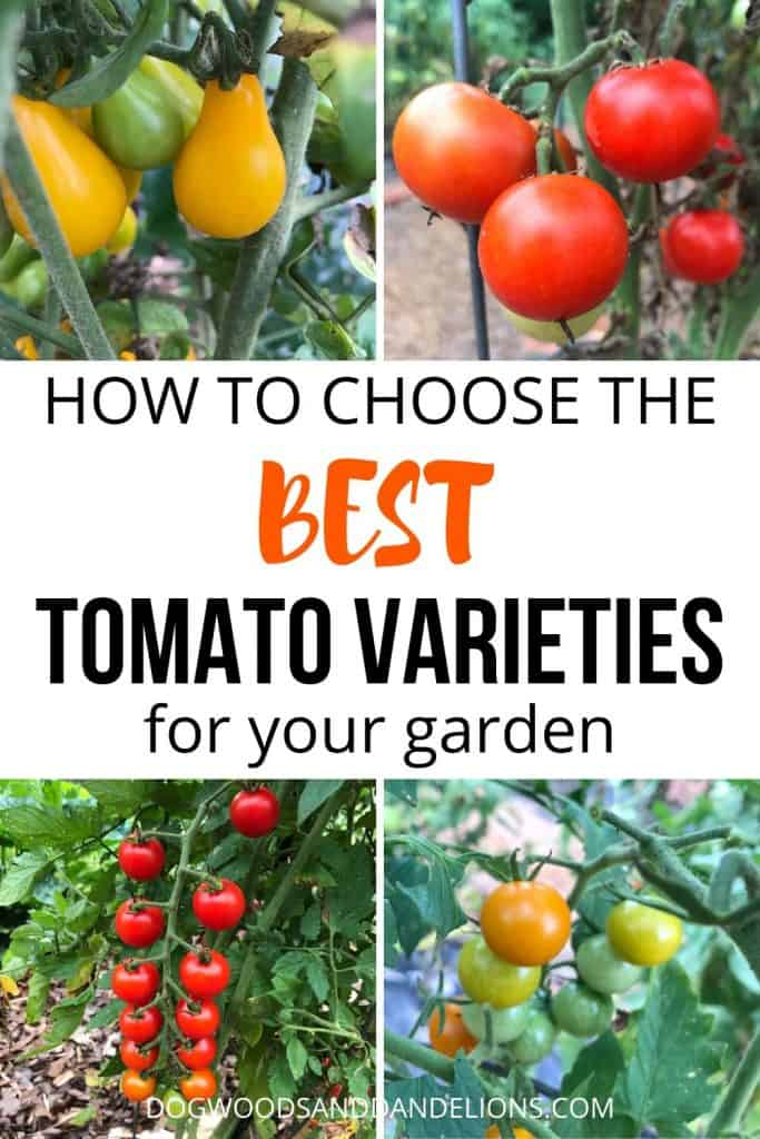types of tomatoes to grow