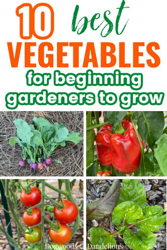tomatoes, peppers, radishes, and chard are all great vegetables for beginners to grow
