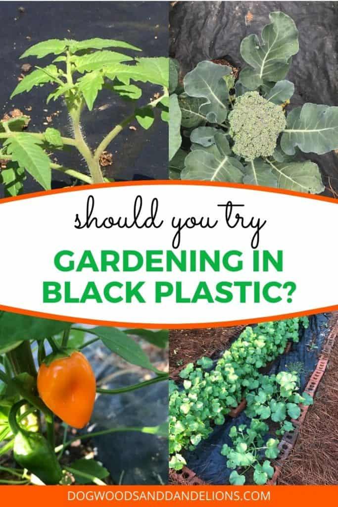 Should you grow a garden in black plastic?