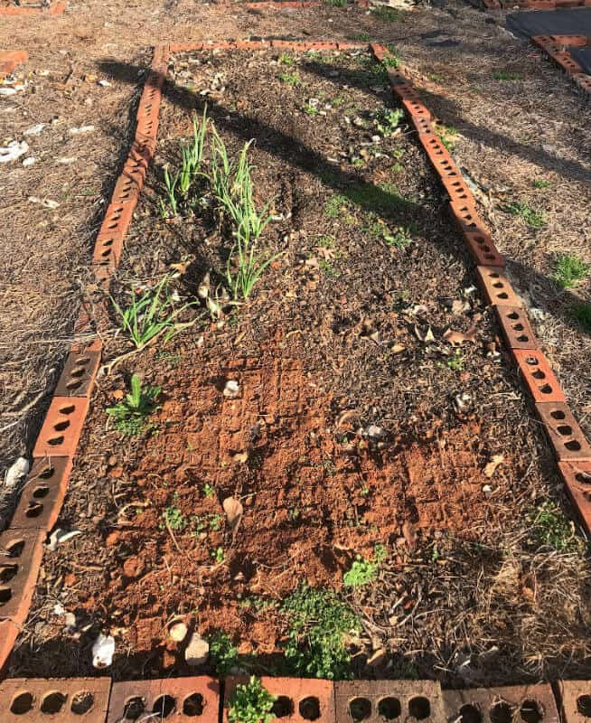 Bricks used to frame a garden bed.