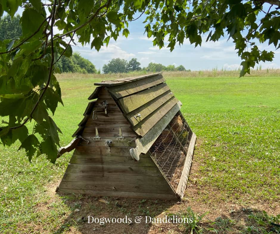 a chicken ark