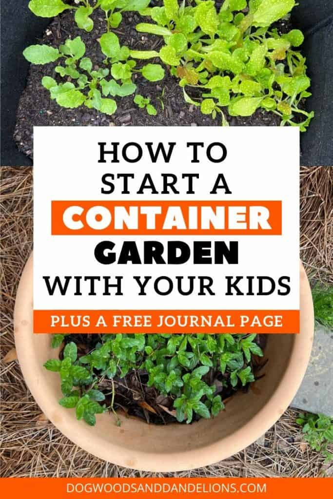 start a container garden with your kids