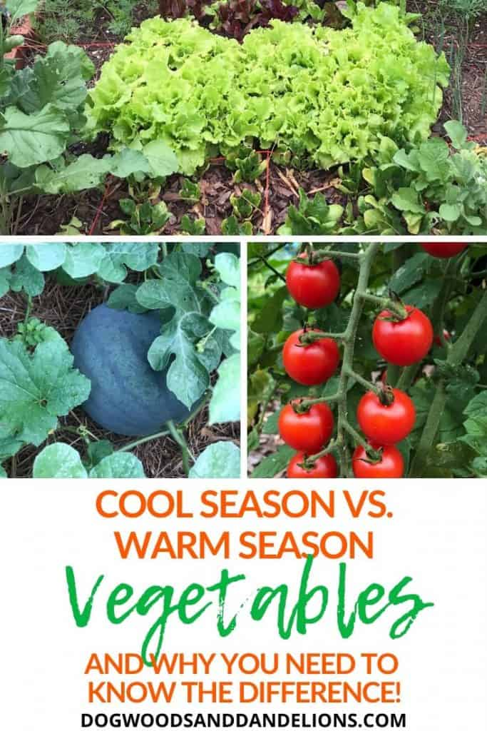 Cool season vegetables grow best in fall and spring