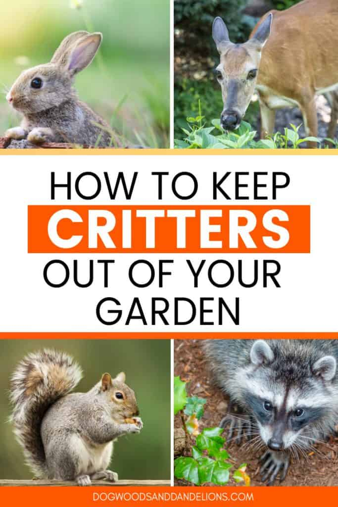 critters in the garden