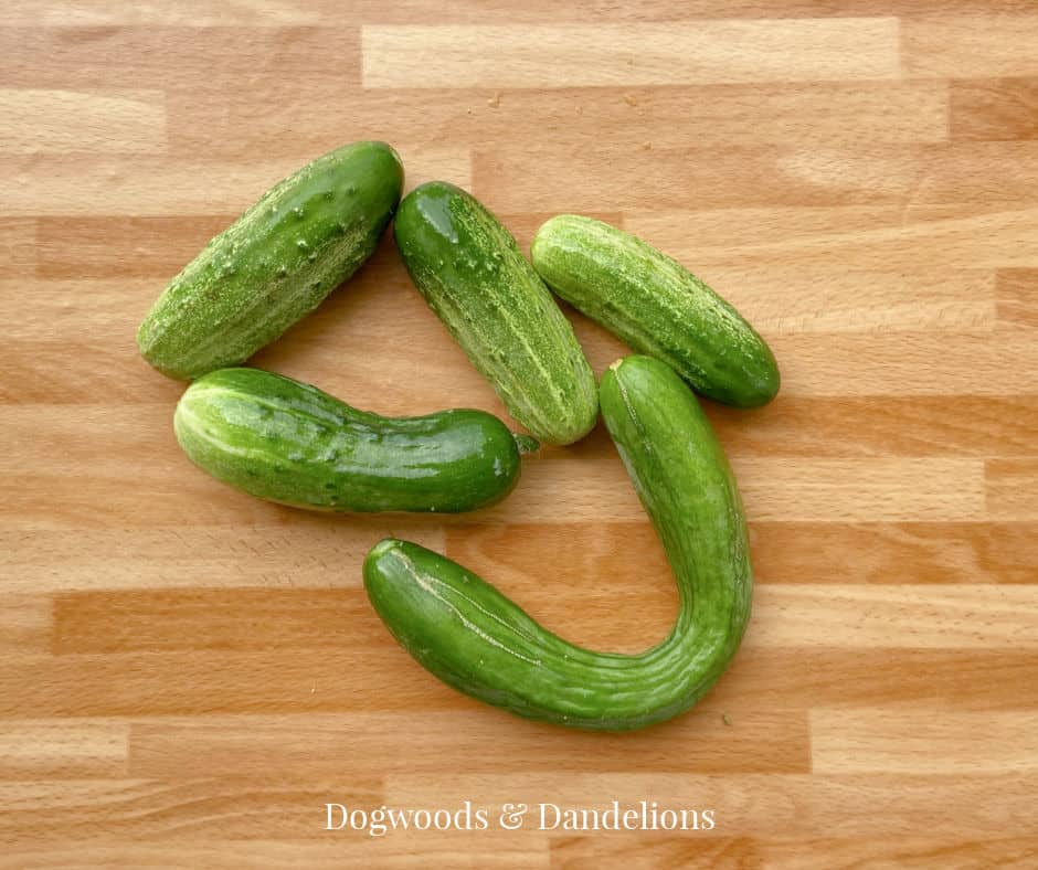 cucumbers suitable for dehydrating