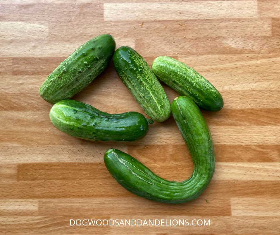 different types of cucumbers