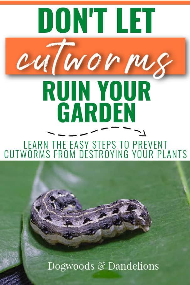cutworms on a leaf