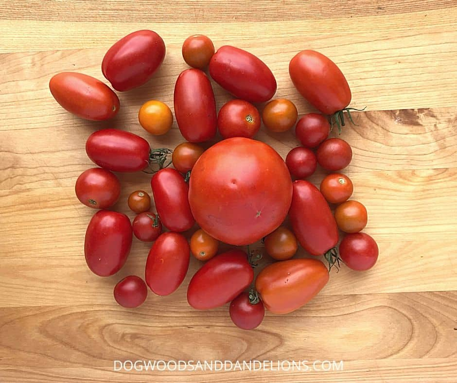 different kinds of tomatoes to grow