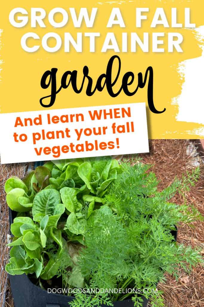 fall container vegetable garden of lettuce and carrots