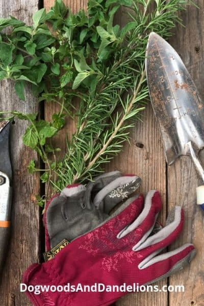 pruners, gloves, and trowel