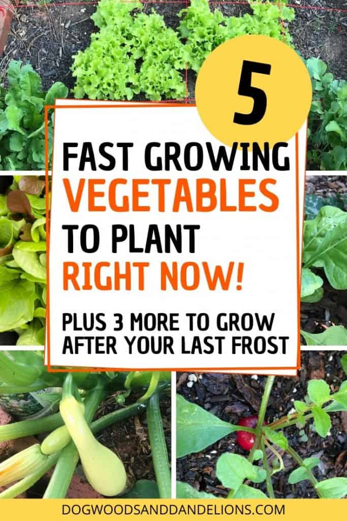 Fast growing vegetables y!ou can plant right now