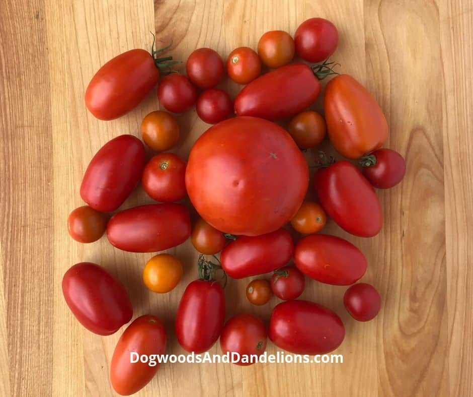 different varieties of tomatoes ready to be frozen