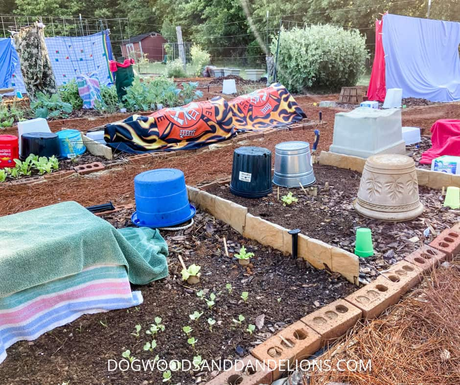 garden covered to prevent frost damage
