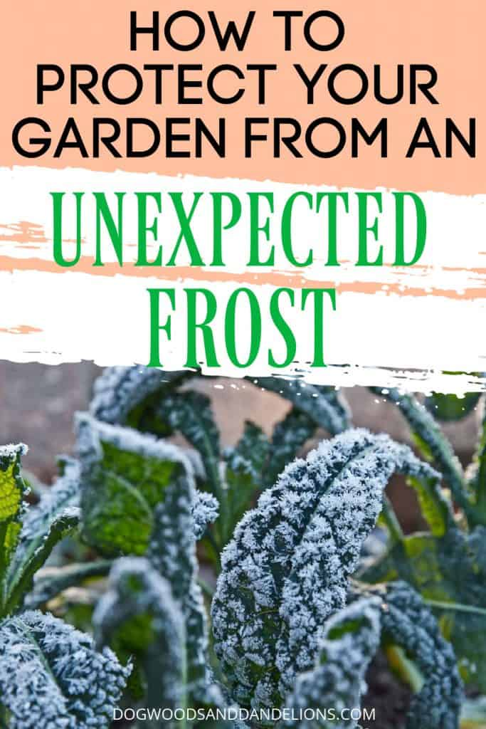 frost protection for your garden
