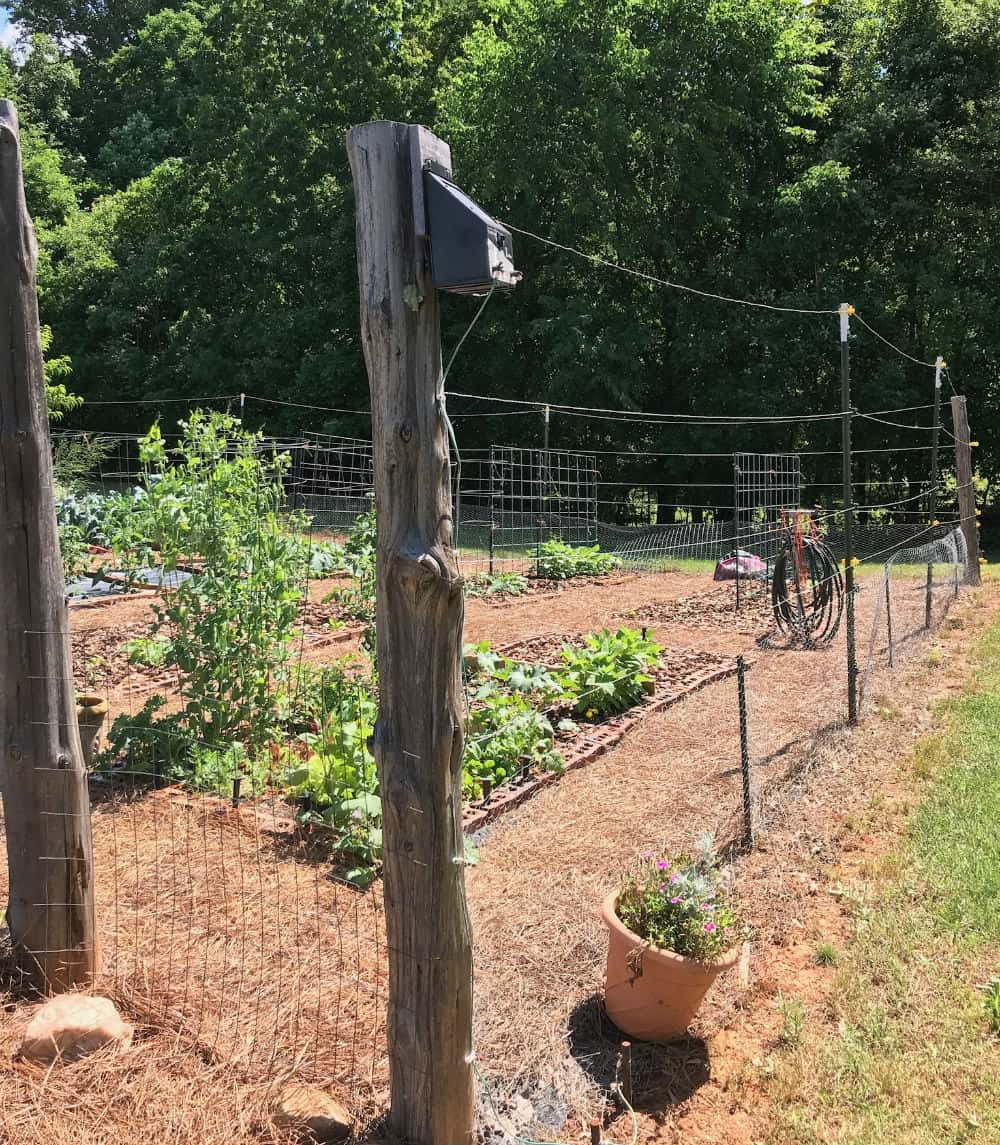 Fencing used to keep critters out of the garden.
