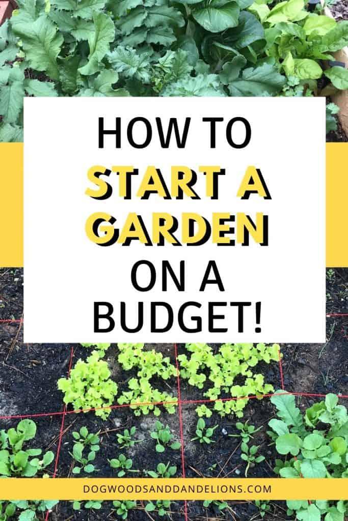 Start a garden on a budget
