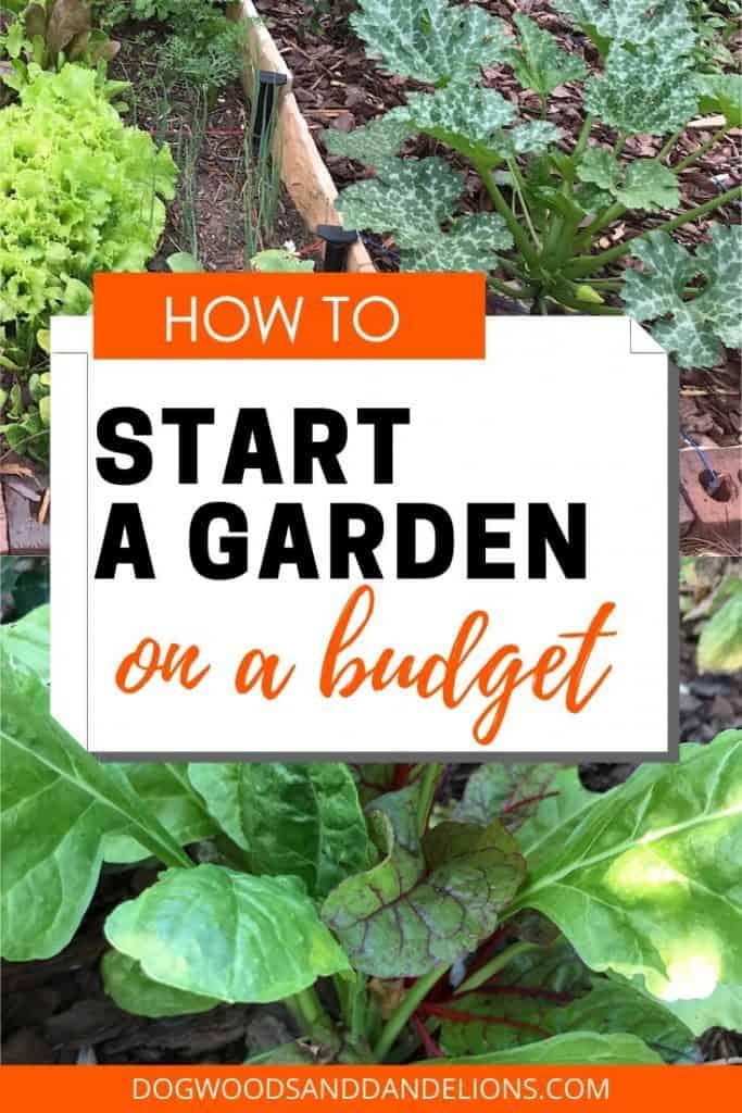 Starting a garden on a budget