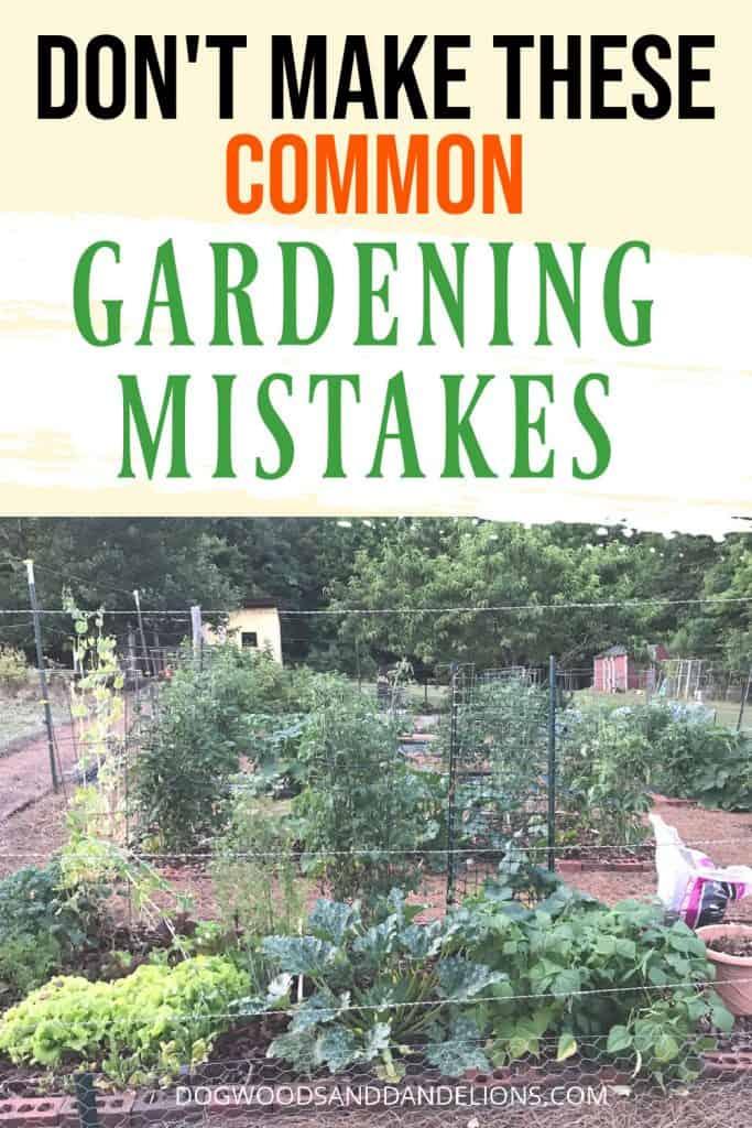 a summer garden full of mistakes