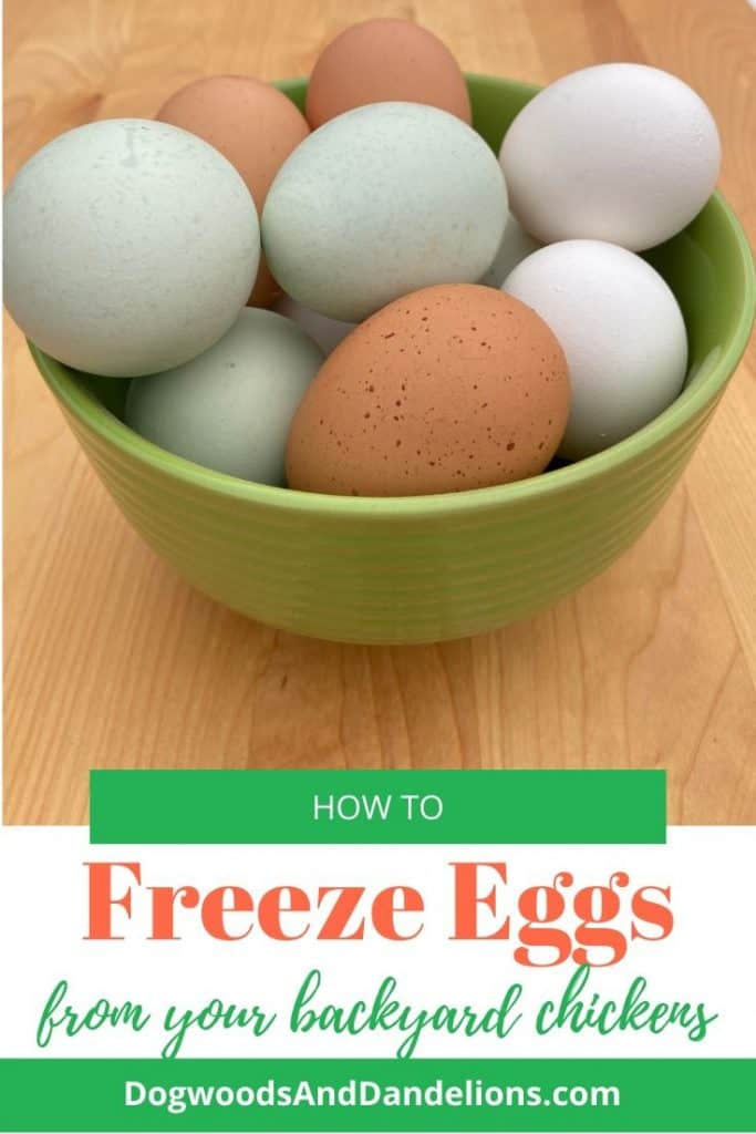 How to freeze your backyard chicken eggs.