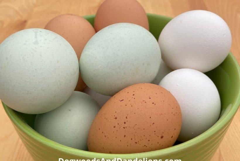 Backyard chicken eggs in a bowl.