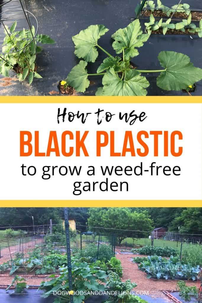 using black plastic in the garden