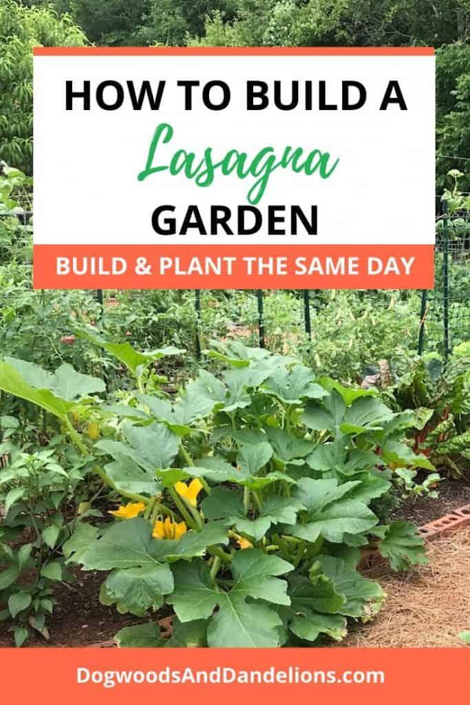A lasagna garden growing in the summer.