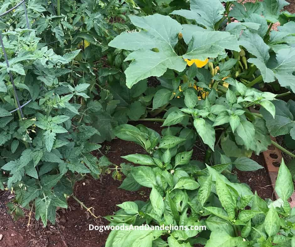 ways to maintain your garden while on vacation