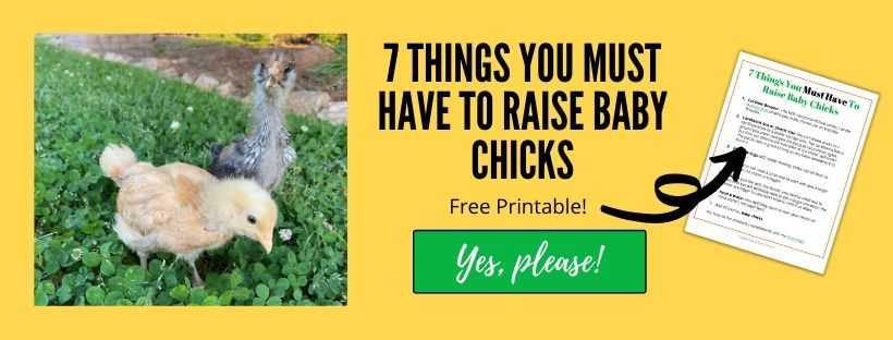 things you must have to raise baby chicks