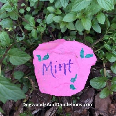 Homemade Plant Markers