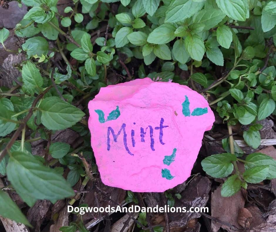 a painted rock used in the herb garden