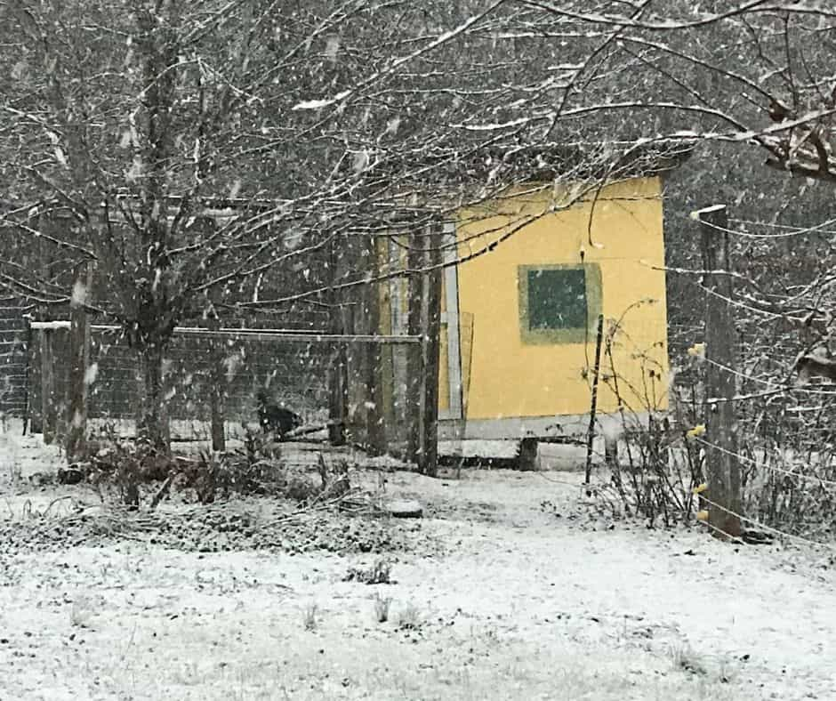 chicken coop in the winter snow