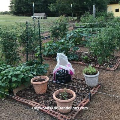 Ways to Prepare The Garden for Winter