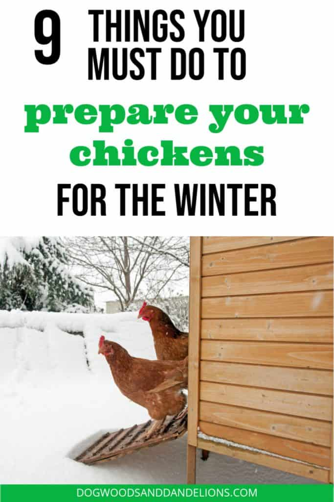 chickens and coop in the snow