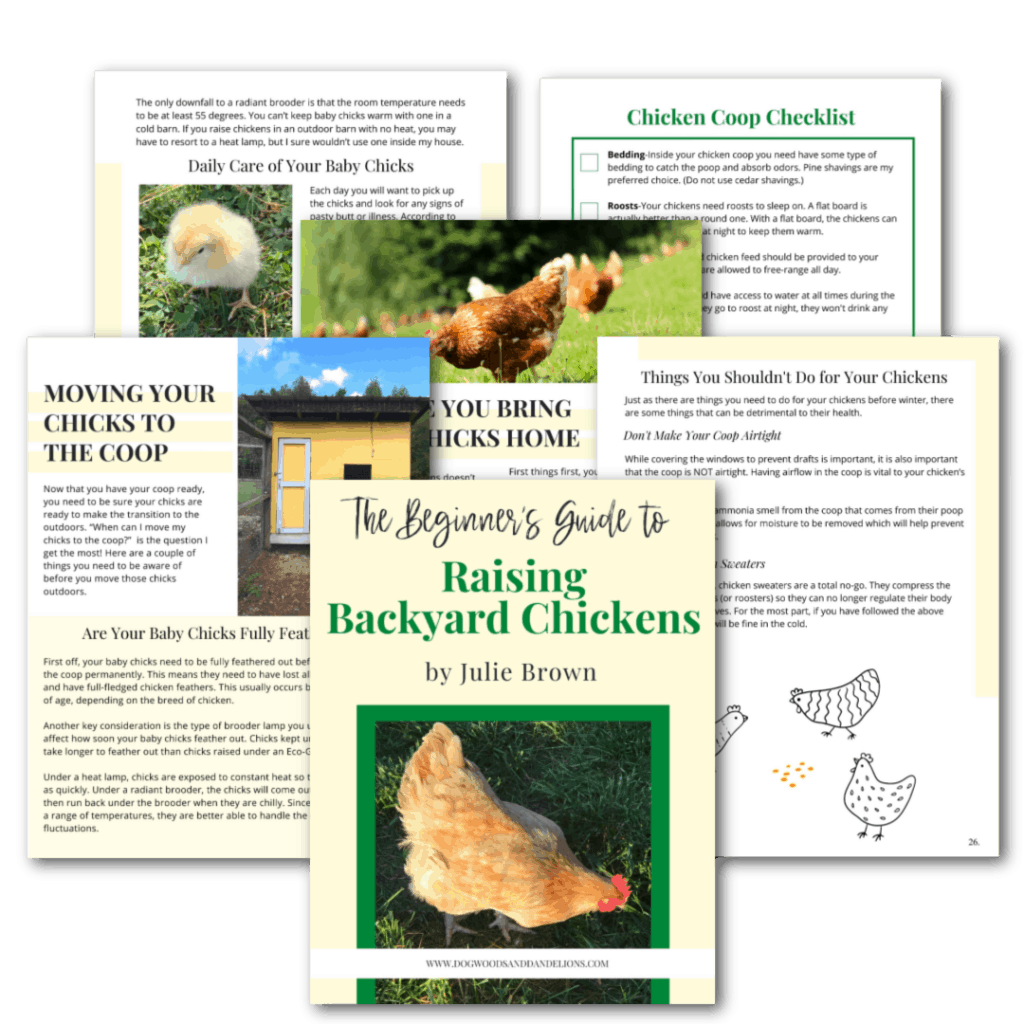 pages from The Beginner's Guide to Raising Backyard Chickens