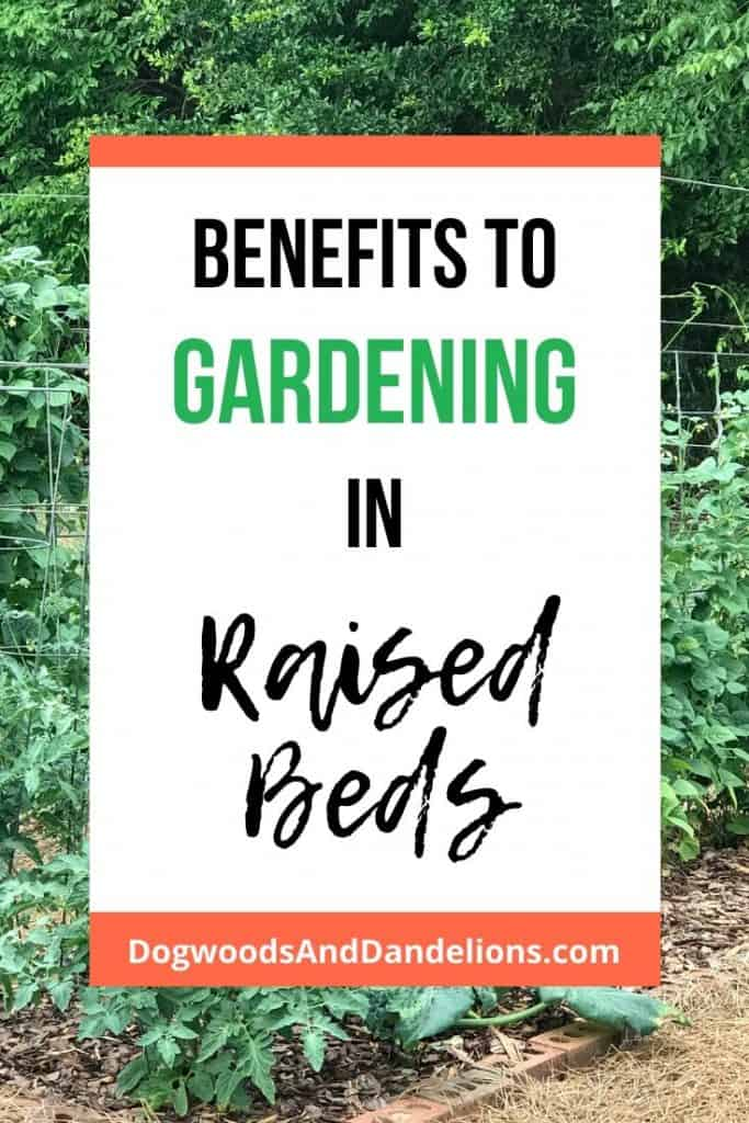 Benefits to gardening in raised beds.
