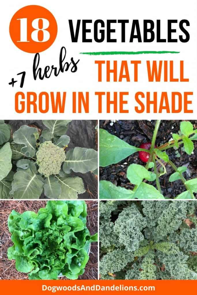 Vegetables to grow in the shade