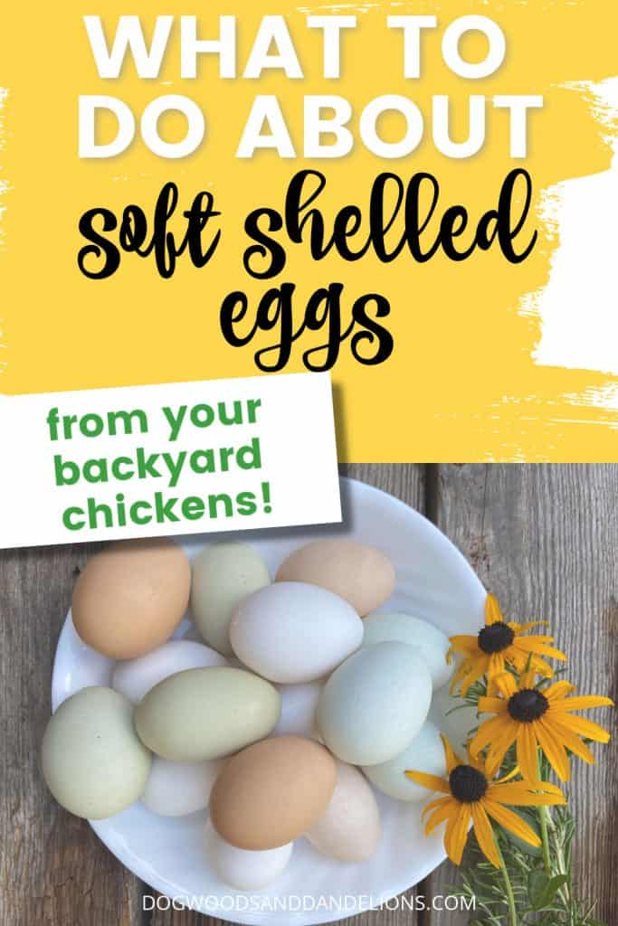 prevent soft shelled eggs