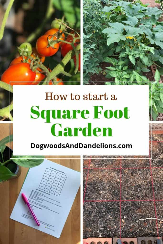 tomatoes, basil and squash, square foot gardening plan, and pic of square foot gardening grids