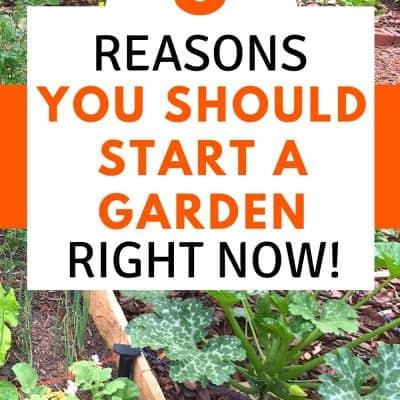8 Reasons You Should Grow a Garden