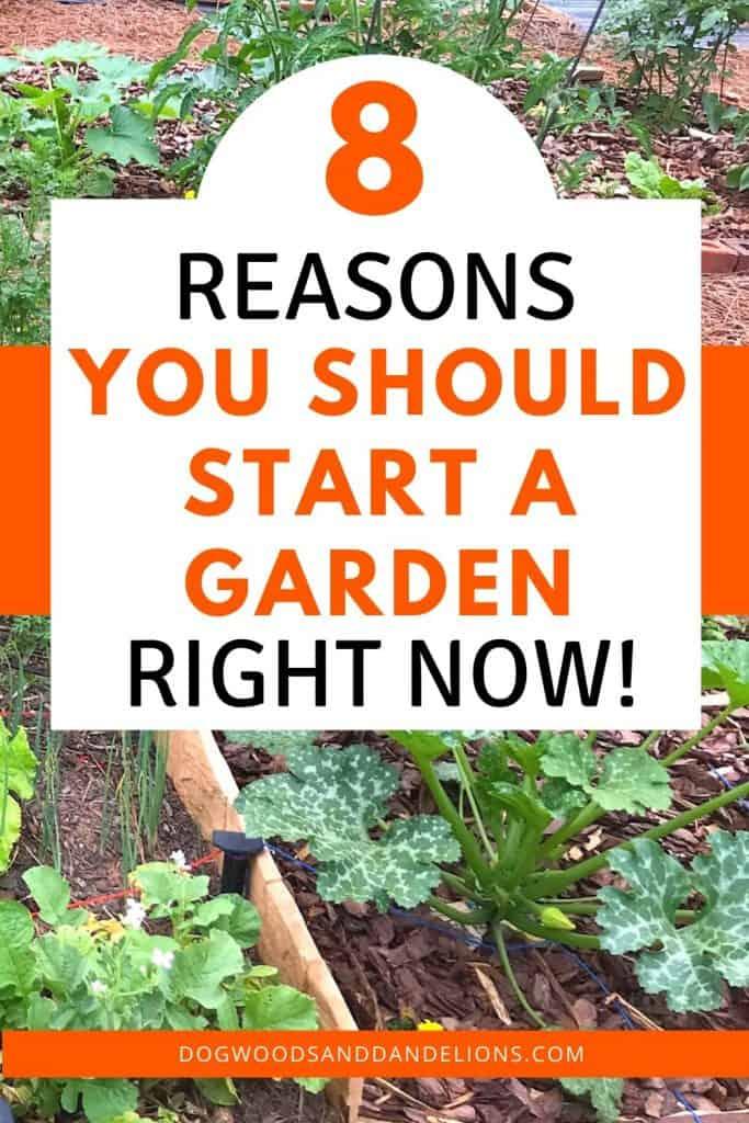 reasons you should start a garden